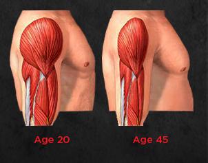 Peningkatan myostatin dengan umur.