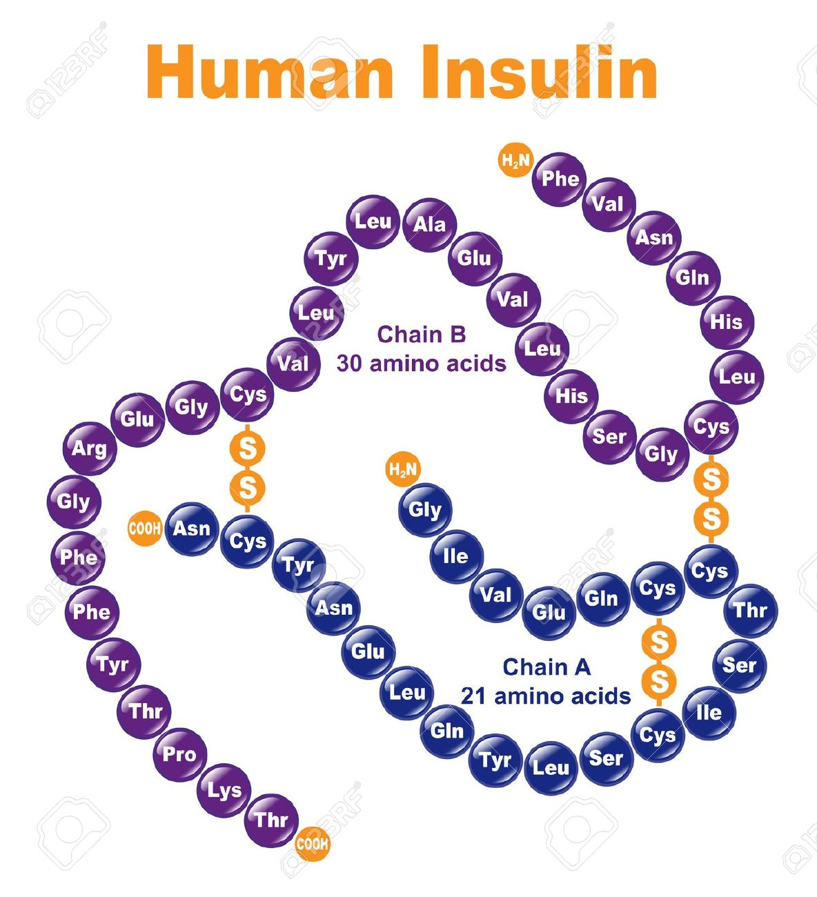 Insulin dan Senaman | Strength Sifoo