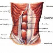 Otot Teras