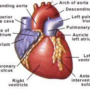 Pecahan Arteri