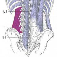 Kecederaan Quadratus Lumborum