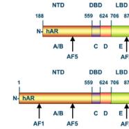 Meningkatkan Reseptor Androgen
